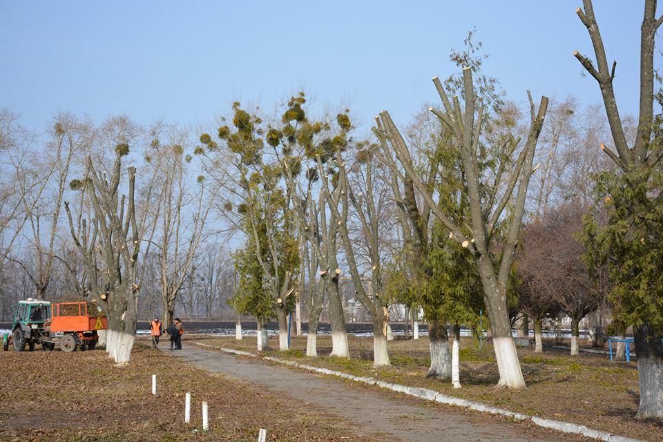На Миронівщині взялися за кронування дерев