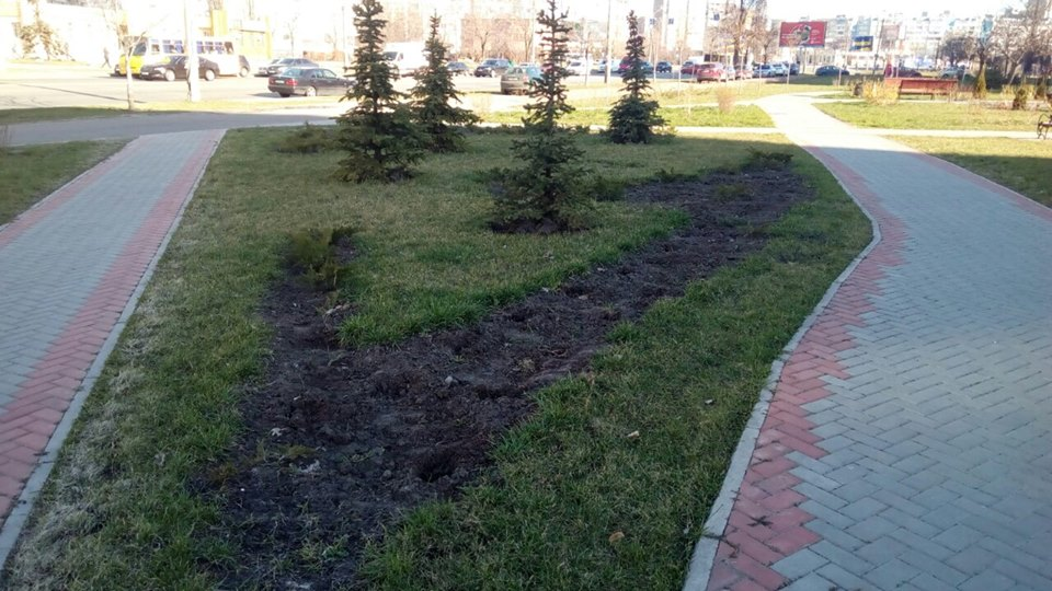 0405_ukraly_dereva У Києві вкрали 300 дерев