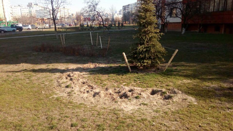 0405_ukraly_dereva2 У Києві вкрали 300 дерев