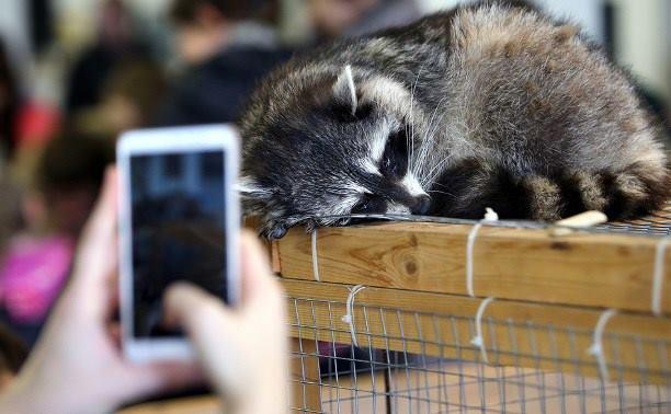 1604_zoopark Вчені довели, що контактні зоопарки шкодять не тільки тваринам, а й людям