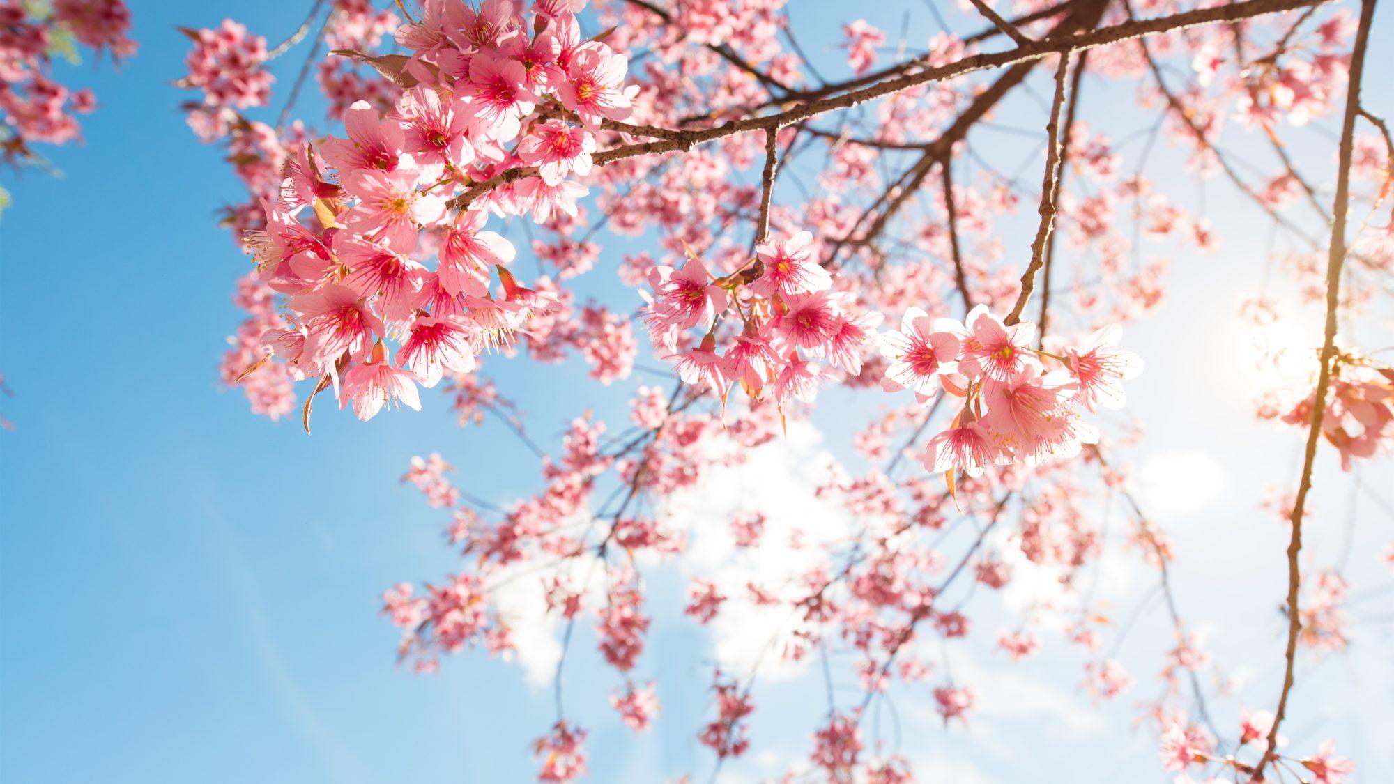 24 квітня на Київщину прийде справжнє «літо» - прогноз погоди, погода - 2304 pogoda4 2000x1125