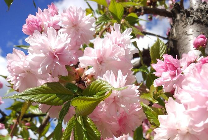 24 квітня в українському народному календарі: звичаї, прикмети, заборони - прикмети, народний календар, іменинники - 24340777