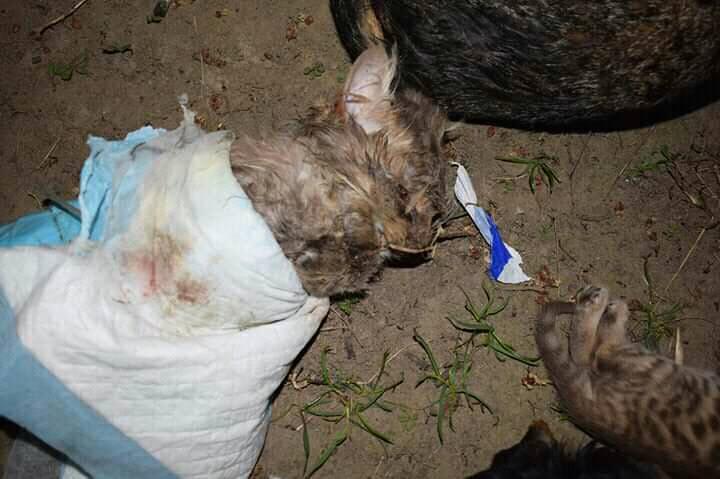 57101584_2135515536545381_649187888793124864_n У Києві виявили коробку повну мертвих тварин