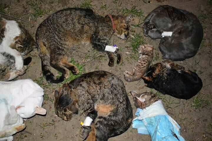 57217978_2135515186545416_3446347475604996096_n У Києві виявили коробку повну мертвих тварин
