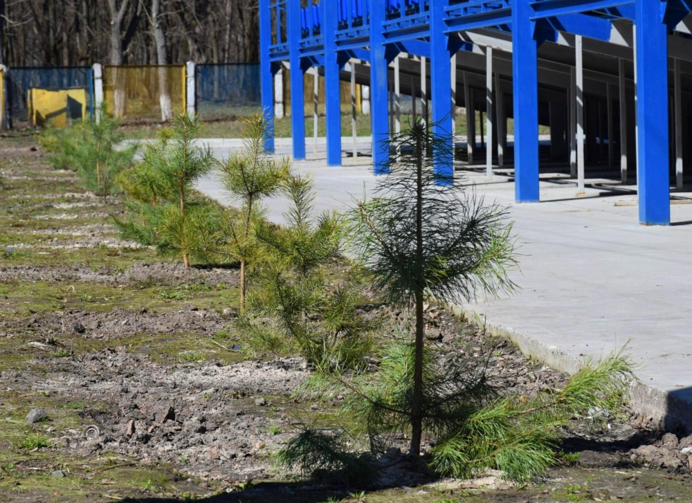 Яготин засаджають деревами - Яготин, рослини, озеленення - DSC 4932 2