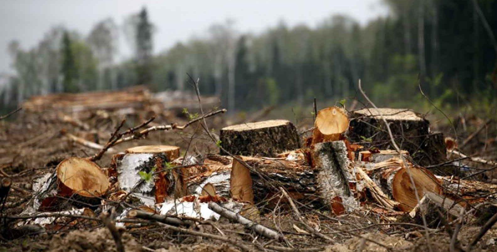 Чому в Україні закривають кримінальні справи про незаконну вирубку лісу - Україна, суд, ліс, вирубка - huge 17e1963a 004f 4a13 9fde b89aec73ca27 e1538562558408