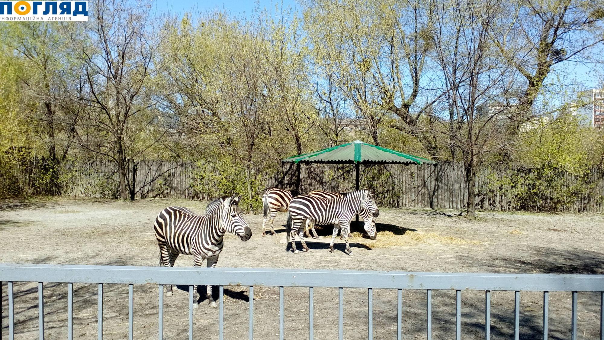 Київський зоопарк – без кліток для тварин -  - 000IMG 20170409 132322 2000x1125