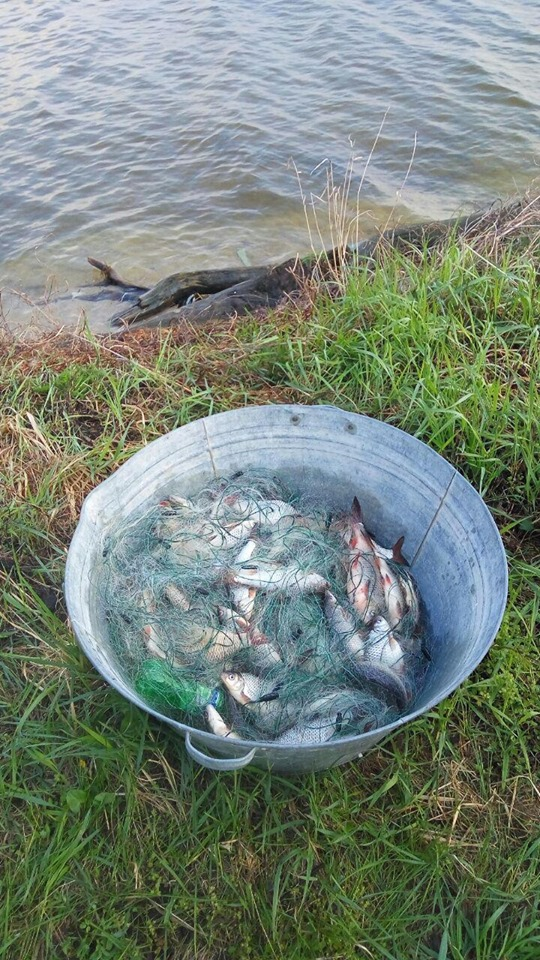 Київський рибоохоронний патруль вилучив у браконьєрів майже 300 кілограмів риби - київщина, Київський рибоохоронний патруль, Київське водосховище, Канівське водосховище, збитки, Десна, браконьєри - 0502 RYba2