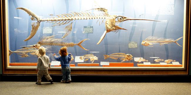 Незабаром столичні музеї ще більше порадують відвідувачів цікавими експозиціями -  - 1495081085 333