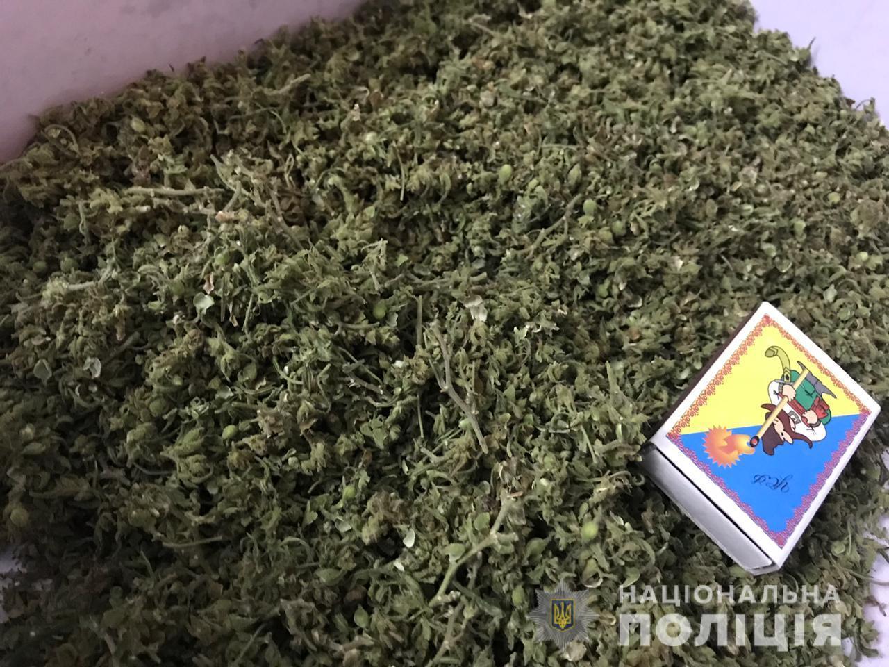 Житель Білої Церкви вирощував наркозілля в Яготині - наркотики, наркозілля, збут наркотиків - 1805 yagotyn