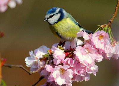 17 травня в українському народному календарі:  прикмети, іменинники, заборони -  - 1 m