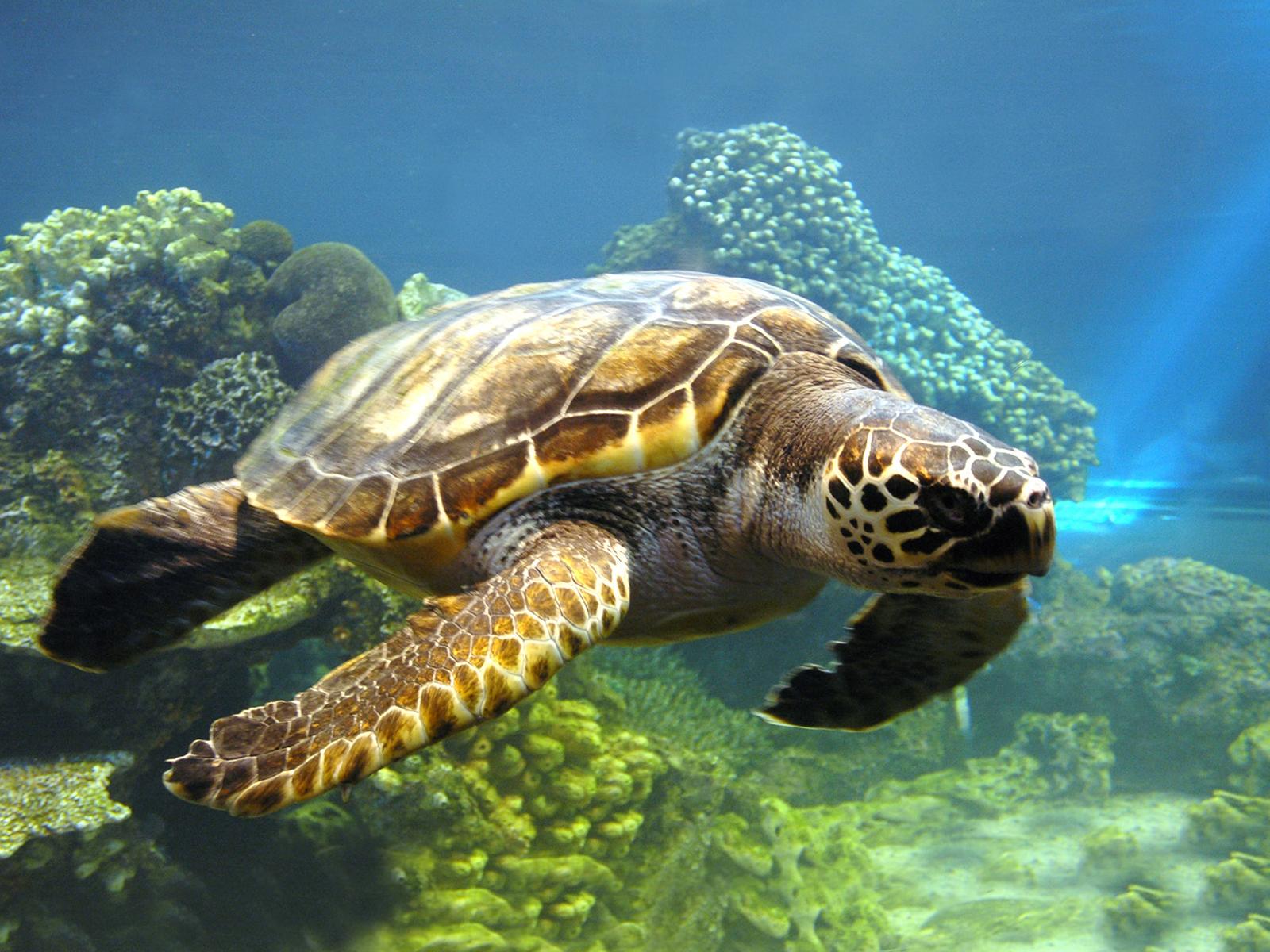 2305_cherepaha Всесвітній день черепахи: цікаві факти та секрет довголіття