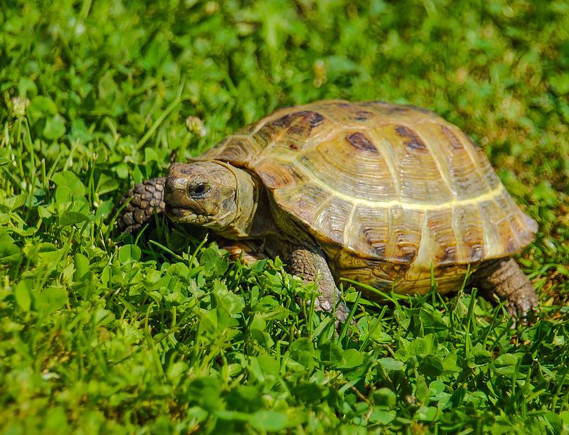 2305_cherepaha6 Всесвітній день черепахи: цікаві факти та секрет довголіття