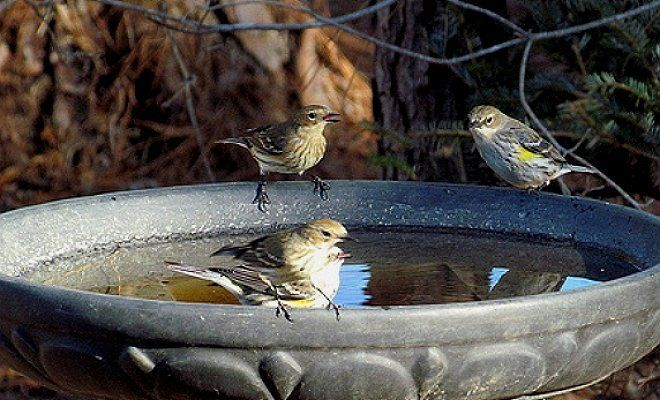2305_speka3-1 Напійте мене: тваринам і птахам потрібна вода