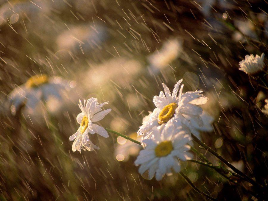 24 травня на Київщині буде дуже тепло, але – з дощами - прогноз погоди, погода - 2405 pogoda3 1