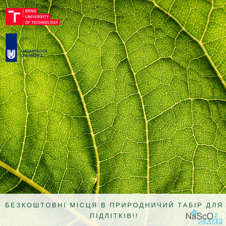 Природничий табір на Київщині безкоштовно прийме на літній відпочинок дітей-переселенців - табір - 2805 tabir