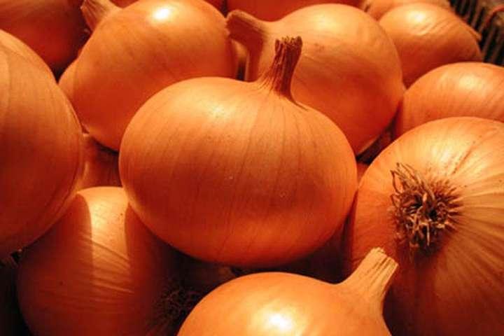 Ціни на цибулю «впадуть» не раніше вересня, – експерти - ціни, цибуля - 3005 tsybulya