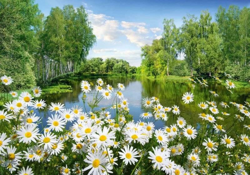 27 травня в народному календарі: прикмети, іменинники, заборони - прикмети - 417669466 w640 h640 fotooboi romashki 194136