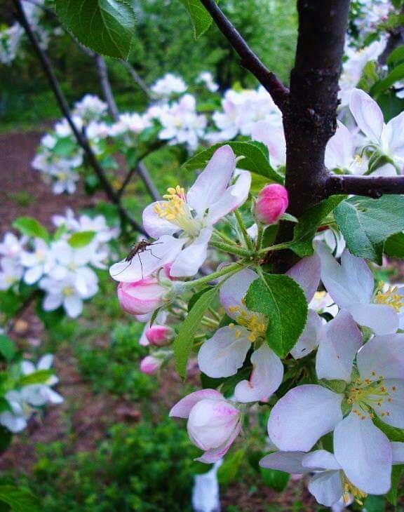 2 травня в українському народному календарі: традиції, прикмети, іменинники, заборони - іменинники, заборони - 59574408 314741709199387 2698955378632163328 n
