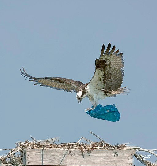 У Всесвітній день мігруючих птахів українцям нагадали про шкоду пластику -  - 59937917 2159309380826293 1028013126810861568 n