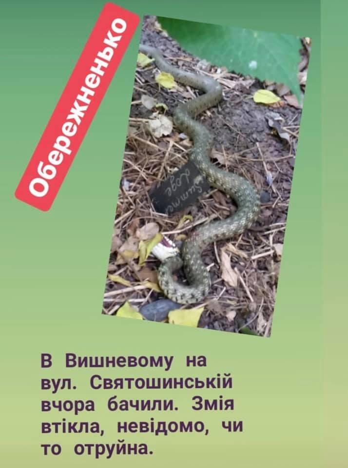 60443307_326377478039645_2815212871955251200_n Ондатра у Чабанах та змія у Вишневому: яких ще тварин знайшли на Київщині