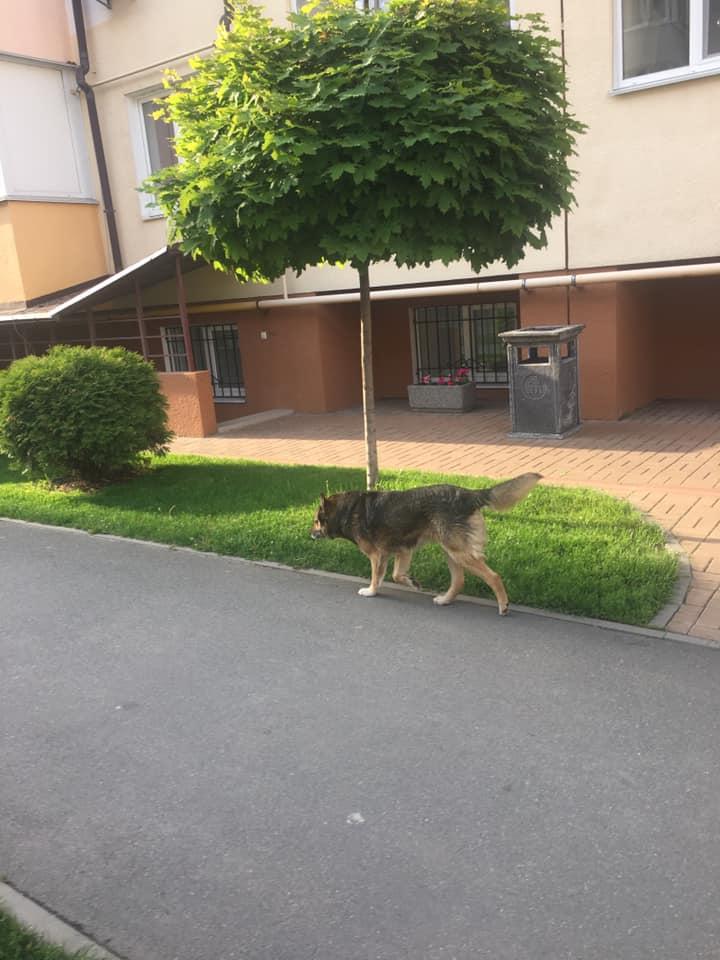 У Вишневому знайшли пса, який пошматував обличчя дитини - дівчинка - 60474868 1100489880159605 4426616715161370624 n 1