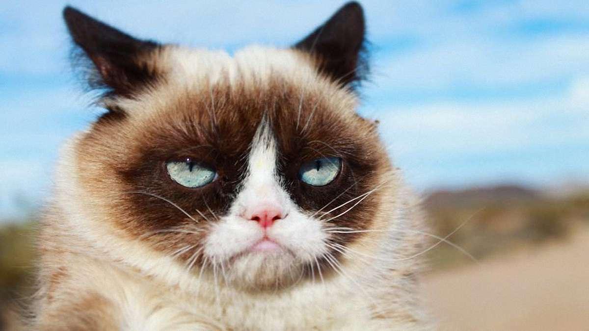 Померла найвідоміша кішка світу -  - 975192