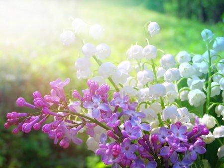 7 травня в українському народному календарі: звичаї, прикмети, заборони - іменинники, звичаї, заборони - depositphotos 12880683 stock photo lilly of the valley and