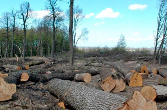 За вирубку дерев будуть саджати: ВР ухвалила закон - незаконне вирубування лісу, лісництво, кримінальна діяльність, довкілля, Верховна Рада України - im578x383 lis ukrinform