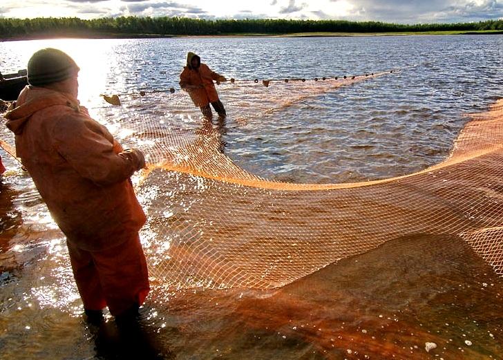 У Яготинському районі виявили рибних браконьєрів - сітки, риба - nvd2 1