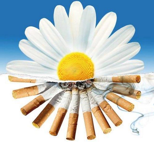 31 травня — Всесвітній день без тютюну -  - 1 640x591