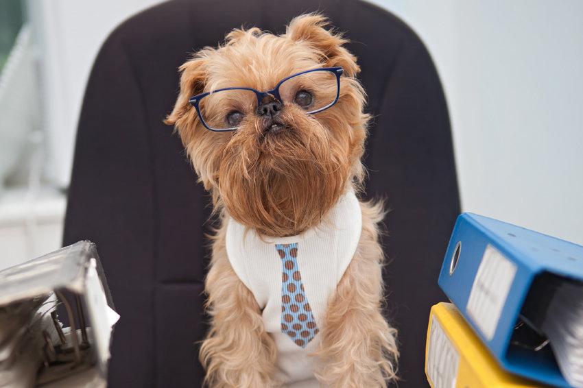 21 червня українці візьмуть на роботу… собак - собаки - 19 rabota