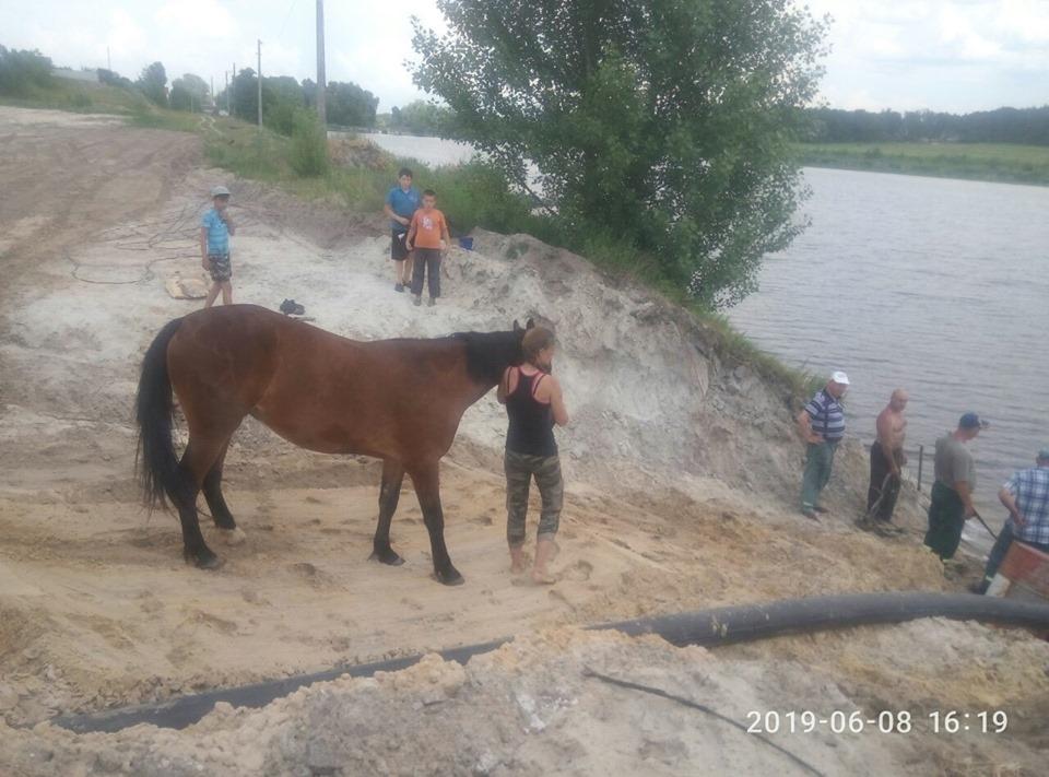 Kin-1 Рятувальники витягли коня: у Бучі тварина застрягла в піску на озері