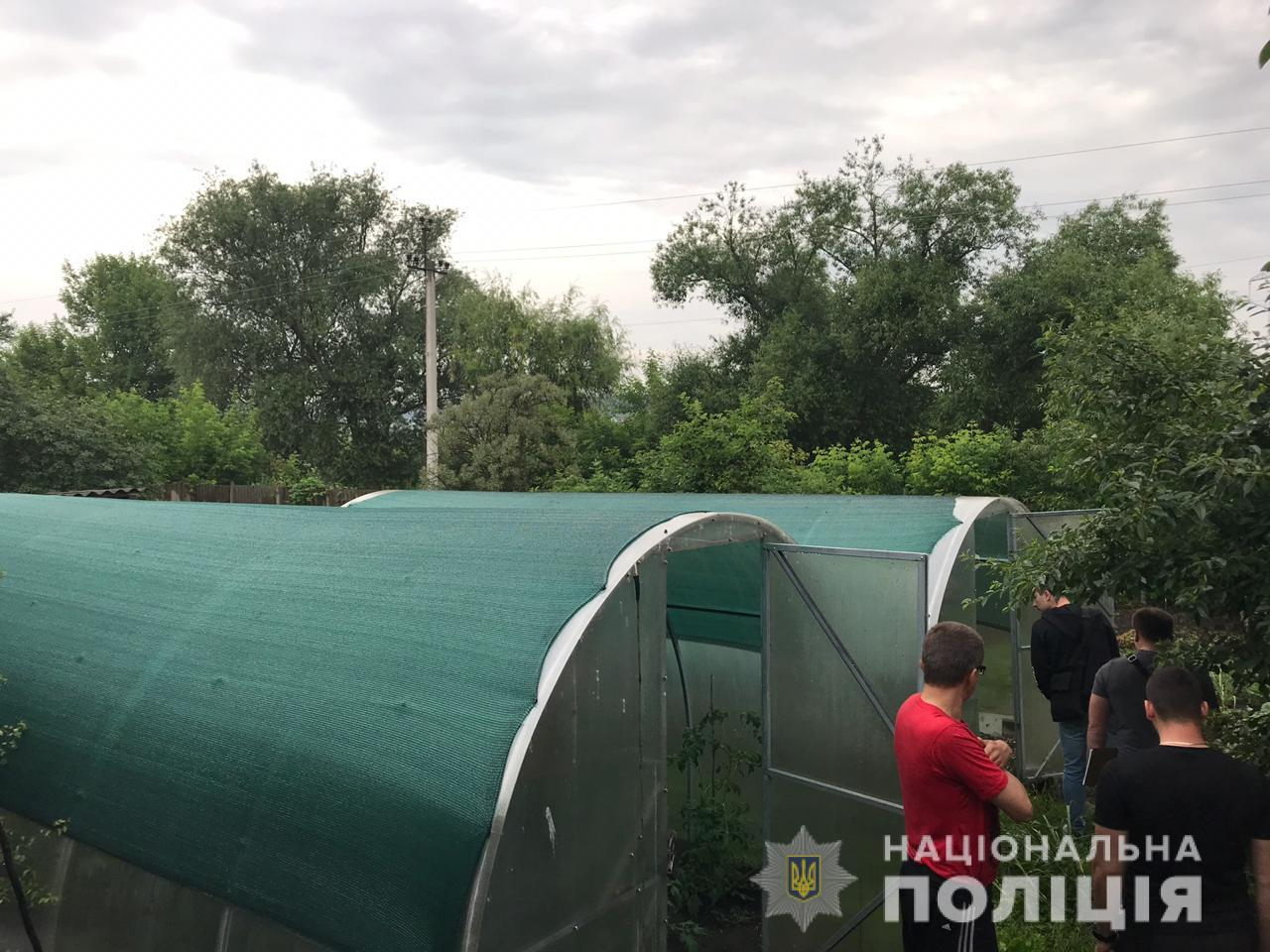 Teplyz-Buch Уродженець Донецька, який тимчасово живе у Бучі, в теплиці виростив 30 кущів конопель