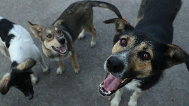 У Білій Церкві стерилізують 160 безпритульних собак: їх у місті 2835 - прес-конференція, Біла Церква - 103590733 gettyimages 836936652
