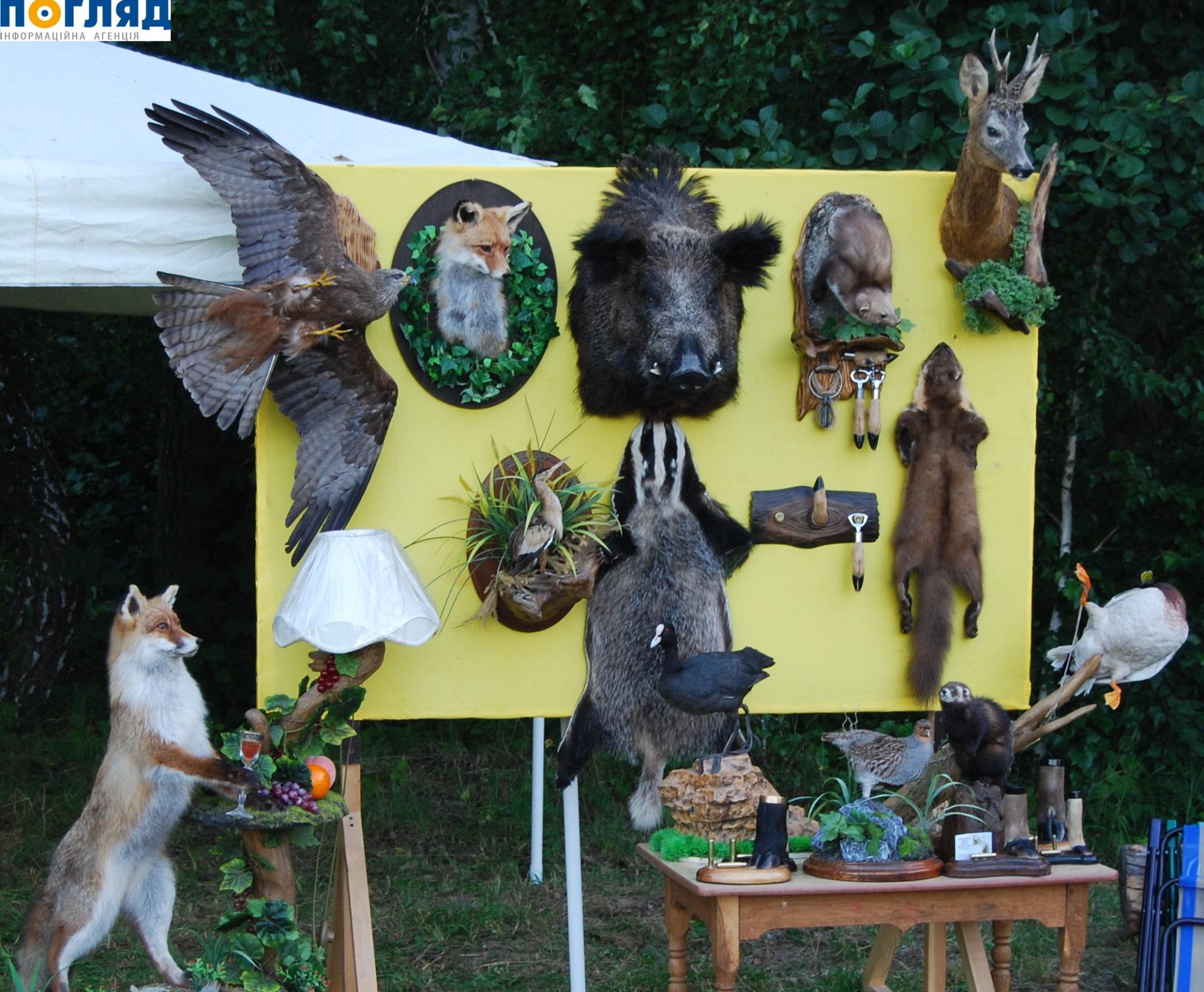 Мисливство – це мистецтво: на Васильківщині готуються до ІІ Всеукраїнського мисливського фестивалю