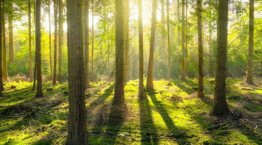 Експерти UNCG відповідають: що ви хотіли дізнатися про українські ліси, і боялися запитати - Опитування, ліс, експерти - 02 les2