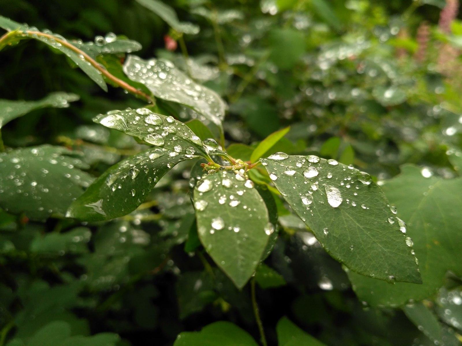 2 серпня на Київщині буде прохолодно та вогко - прогноз погоди, погода - 02 pogoda3