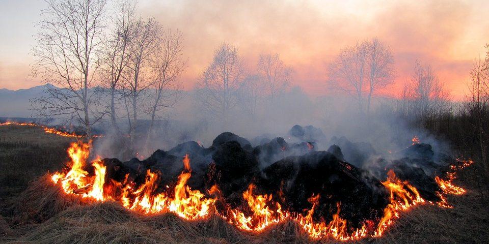 На Київщині оголошено найвищий рівень пожежної небезпеки 06.08.2019 - пожежна небезпека - 06 pozhezhna nebezpeka