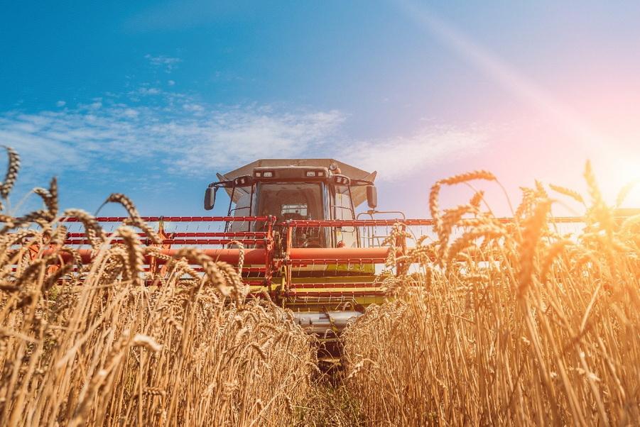 На Київщині намолочено понад мільйон тонн зерна - київщина, жнива - 0807 Urozhaj