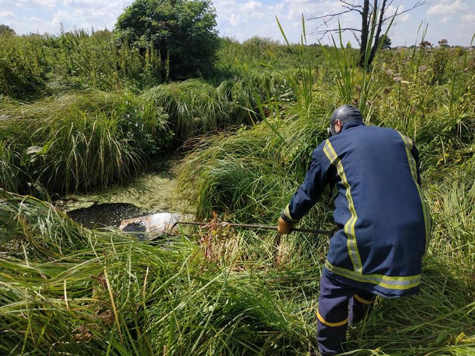 13_utoplennyk На Київщині в річці знайшли понівечене тіло утопленика