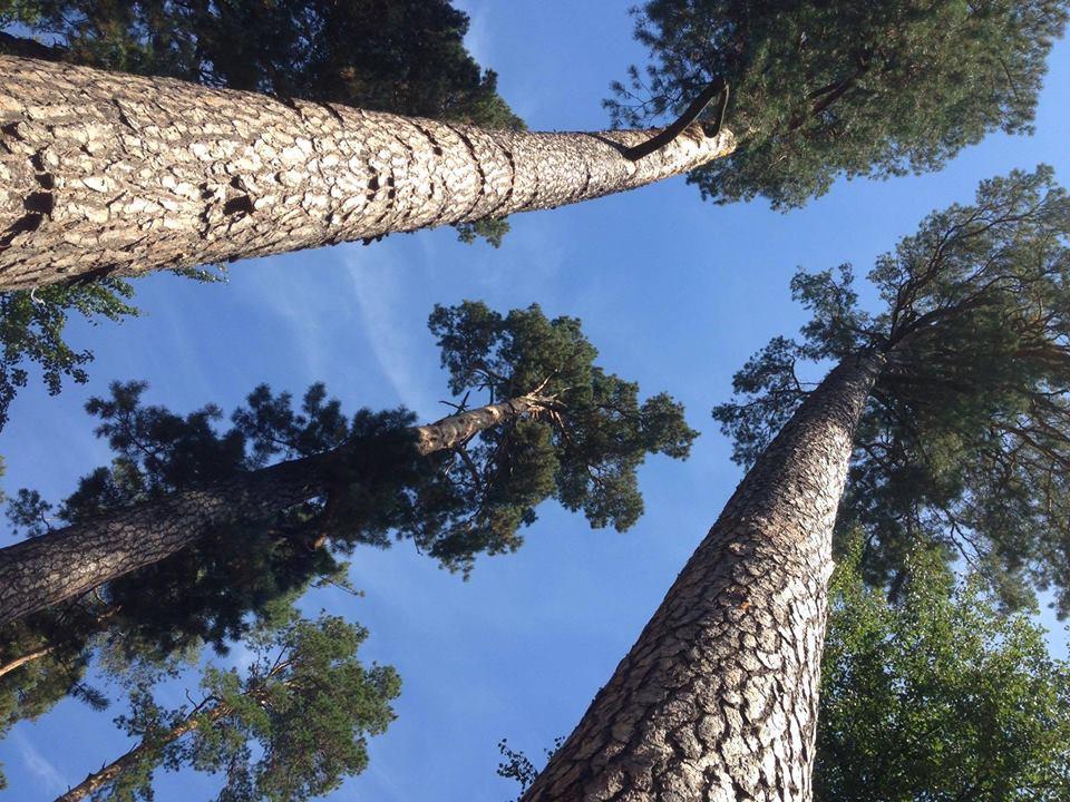 Боярське лісництво планує рубку лісу: активіст знайшов помилки у заяві установи - Приірпіння, Мінприроди, екоактивісти, вирубка лісу, Боярка - 15977986 1804514786478974 7241488081321924975 n