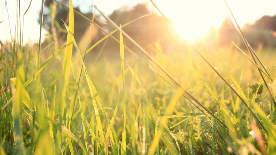 19 серпня на Київщині буде багато сонця та блакитного неба -  - 19 pogoda2