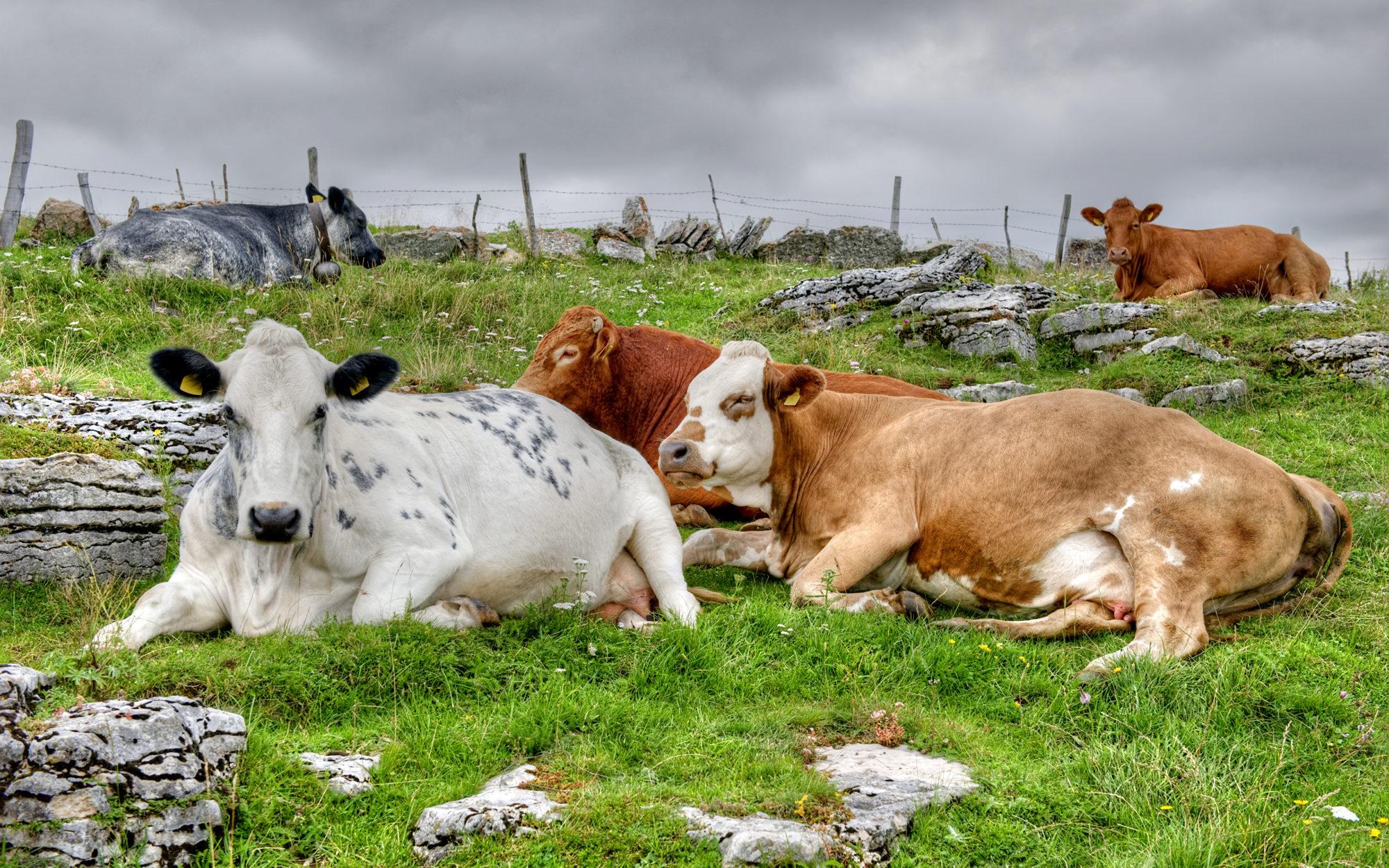 За 2°С до масового голоду: через зміну клімату першим постраждає сільське господарство - клімат, глобальні зміни клімату - 21 klymat 2000x1250