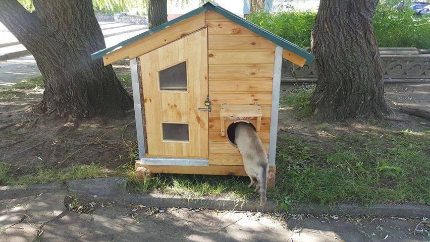 У Славутичі з'явився будиночок для безпритульних котів -  - 67822857 2355154301234136 5971482117564006400 n