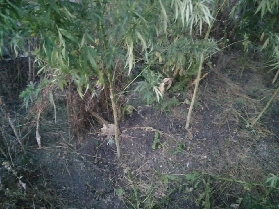 Два брата обкрадали людей у Бориспільському районі -  - 69212099 685684298616836 2413241999344795648 n