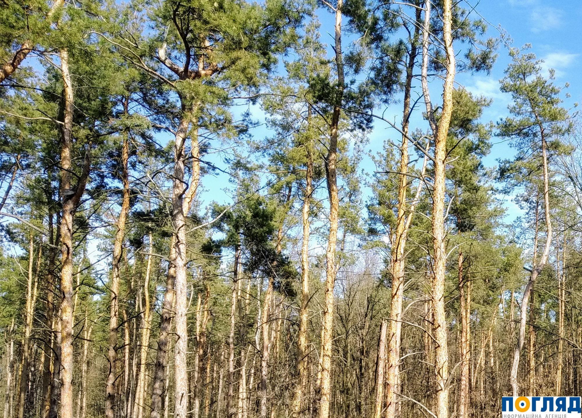 Землю – державі: незаконно віддані ділянки на Васильківщині повертатимуть у суді