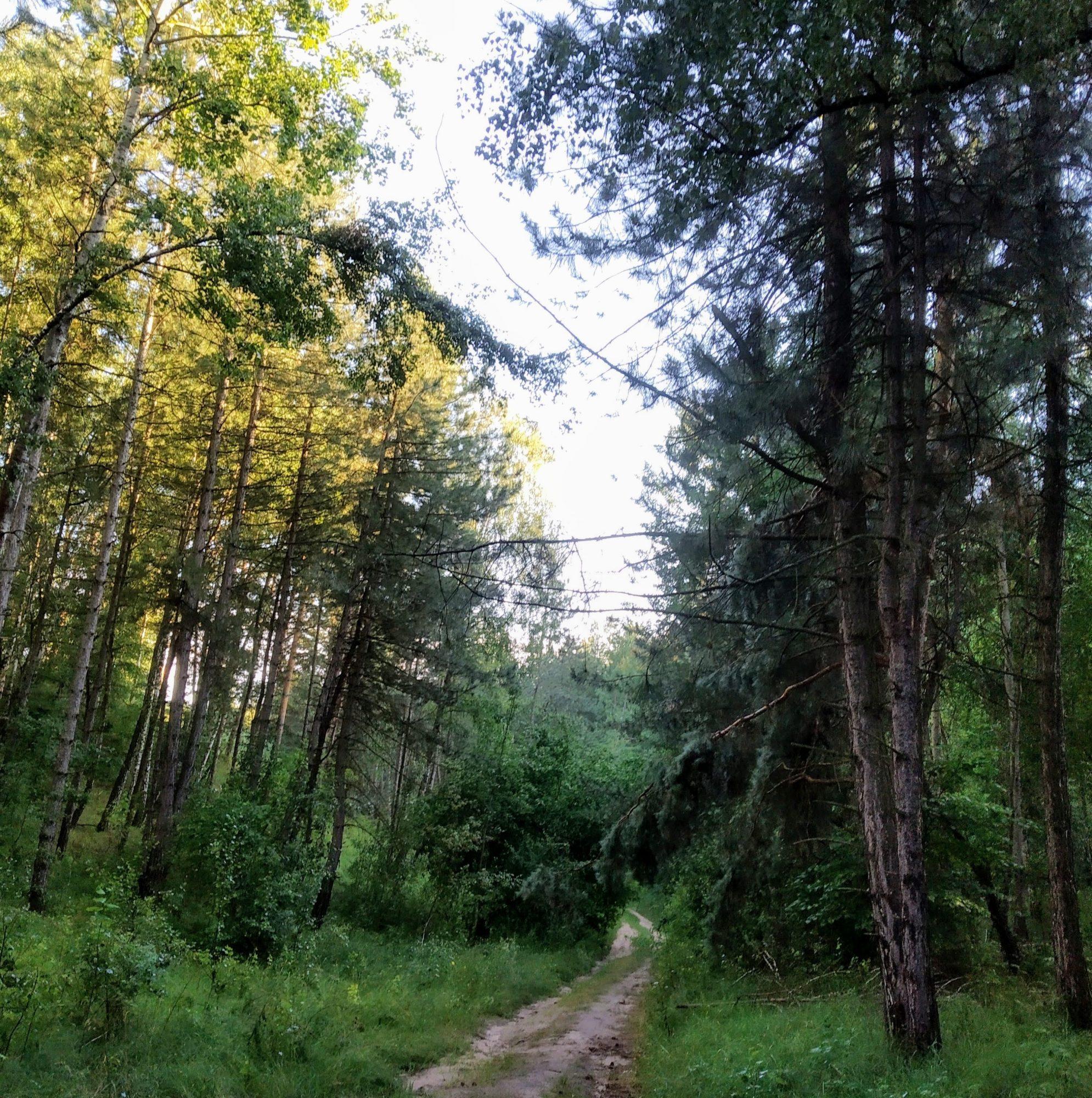 IMG_20190712_192017-1990x2000 Суд з'ясовуватиме, чиї насправді 5 га лісу на Обухівщині