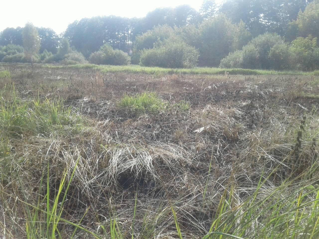 Stoyanka Дві пожежі – за добу: в Стоянці гасили суху траву, в Ірпені – сміття