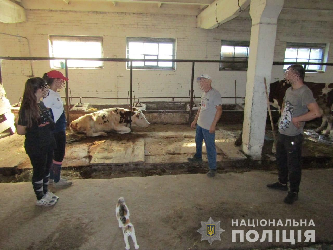 WhatsApp-Image-2019-08-20-at-12.46.19 Віддай корову - отримай в щелепу: в Броварах здійснено напад на ферму